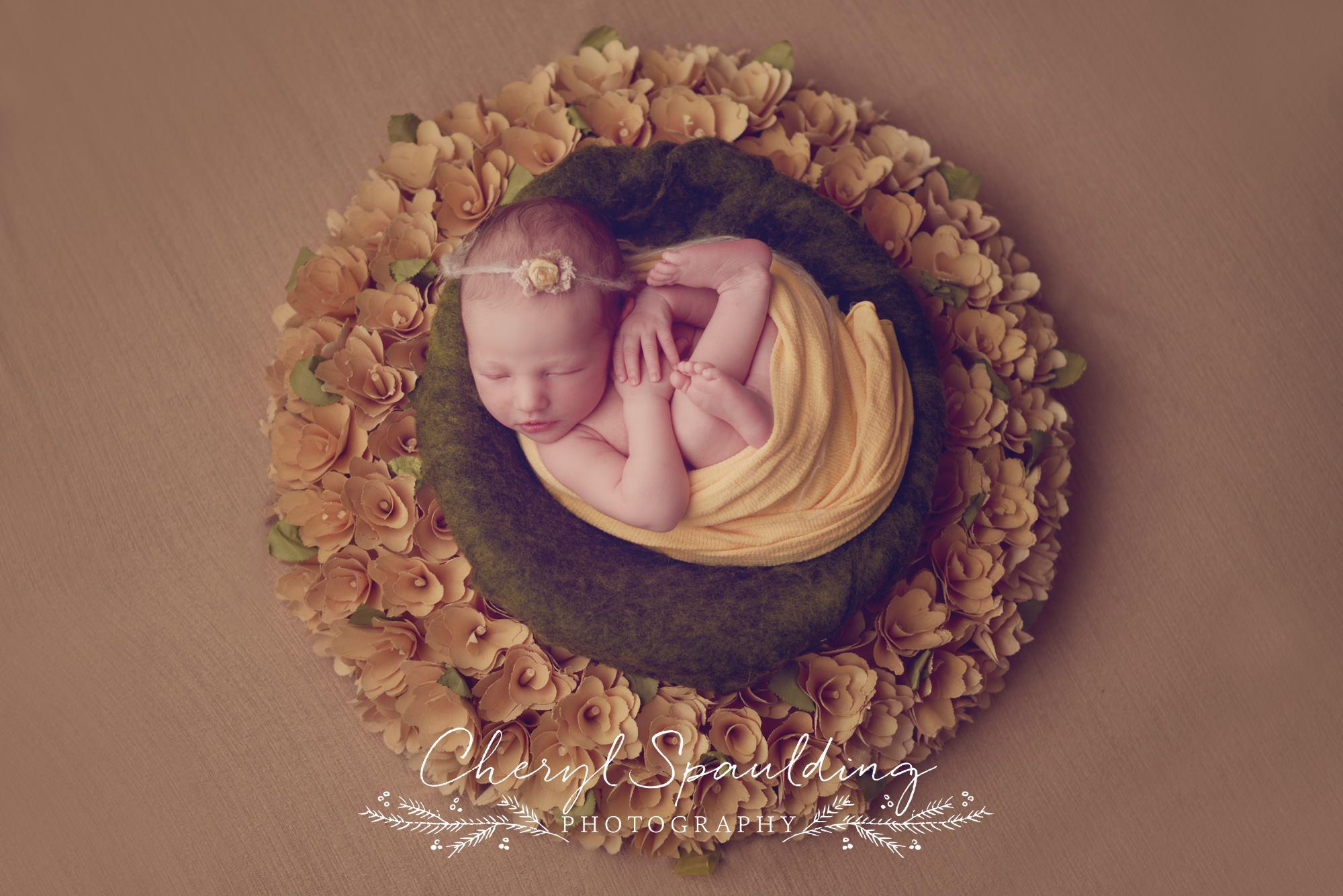 Cheryl-Spaulding-Photography-2